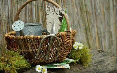 Gardening Help in Brighton & Hove